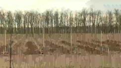 Campania de împădurire pe terenuri nisipoase și degradate din sudul României